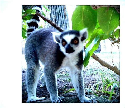 Zoo Fuengirola, Spain