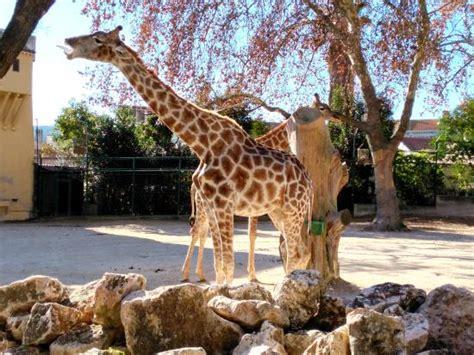 Zoo, Lisboa, Portugal   obrázek zařízení Lisbon Zoo ...