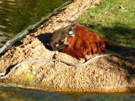Zoo, Lisboa, Portugal   Picture of Lisbon Zoo, Lisbon ...