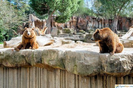 Zoo Madrid »【2021】