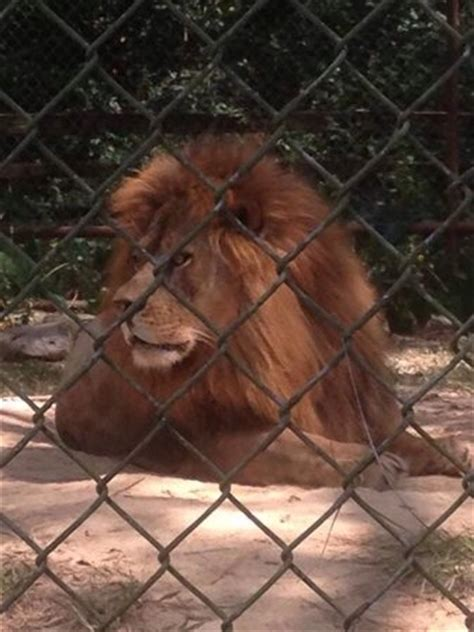 Zoo Of Acadiana  Broussard    All You Need to Know Before ...
