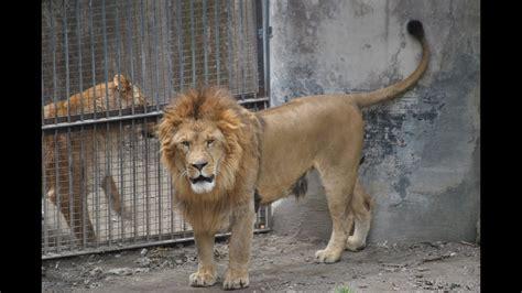 Zoo of Naples Italy   YouTube