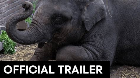ZOO OFFICIAL MOVIE TRAILER [HD]   YouTube