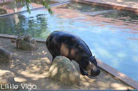 ZOO SANTO INÁCIO EN OPORTO   Little Vigo