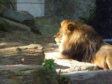 Zoo van Antwerpen: Opiniones, Info, Precios, Ofertas ...