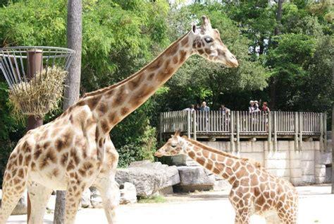 Zoo   Zoo de La Palmyre