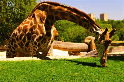 zoo4   Citylife Madrid