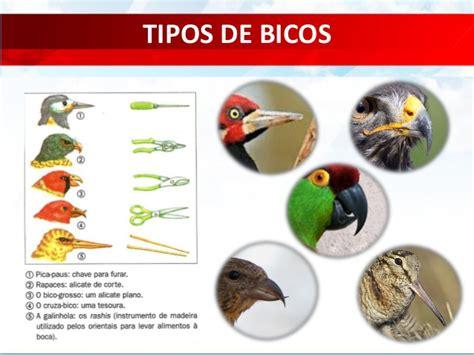 Zoologia   Cordados: Aves
