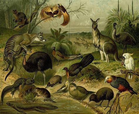 Zoología: Qué es, historia, ramas, carrera y mucho más