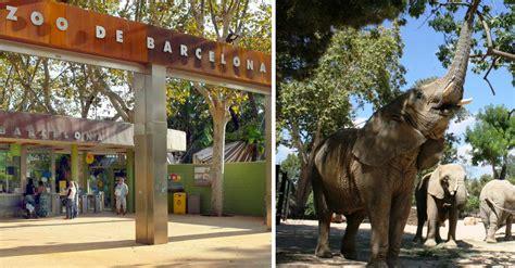 Zoológico de Barcelona cierra para convertirse en el ...