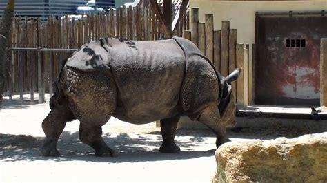 Zoológico de Lisboa   Portugal   2011 // Lisbon Zoo ...