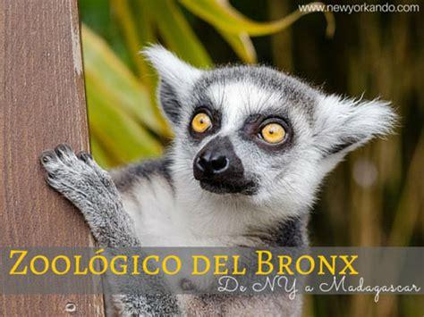 Zoológico del Bronx   cómo llegar, qué ver, horarios, precios