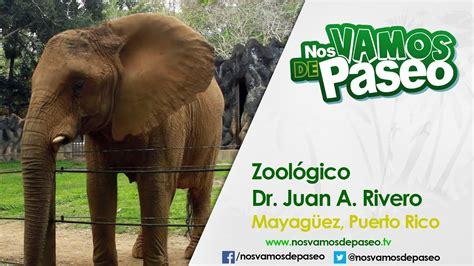 Zoologico Dr. Juan A. Rivero, Mayagüez, P.R.   YouTube
