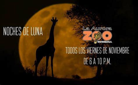 Zoológico La Aurora anuncia inicio de las Noches de Luna ...
