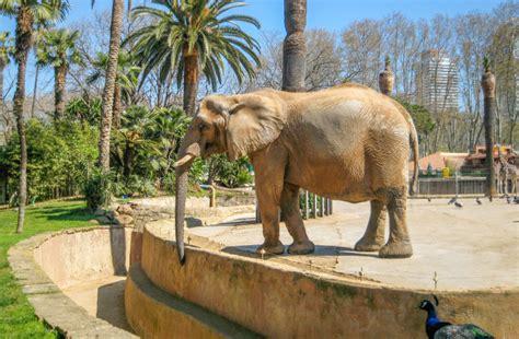 Zoologisk have i Barcelona