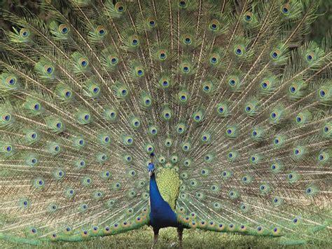 ZOOM DISEÑO Y FOTOGRAFIA: pájaros exóticos,wallpapers o ...
