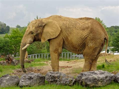 Zooparc de Beauval | Zoos de France.com
