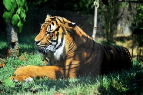 Zoos and Wildlife Parks in Louisiana