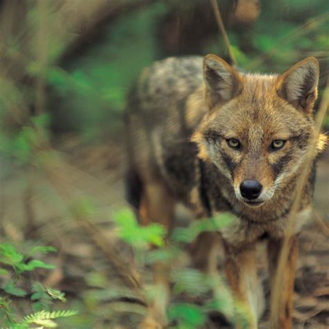 Zoos With Wolves in Texas | USA Today