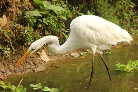 ZooSantaFe: Las aves acuáticas y las zonas inundables