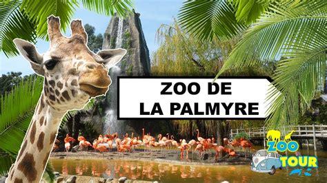 ZOOTOUR #7 Visite du Zoo de la Palmyre   YouTube