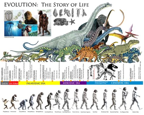 Zsite59: EVOLUTION: The Story of life │ The Prehistoric ...